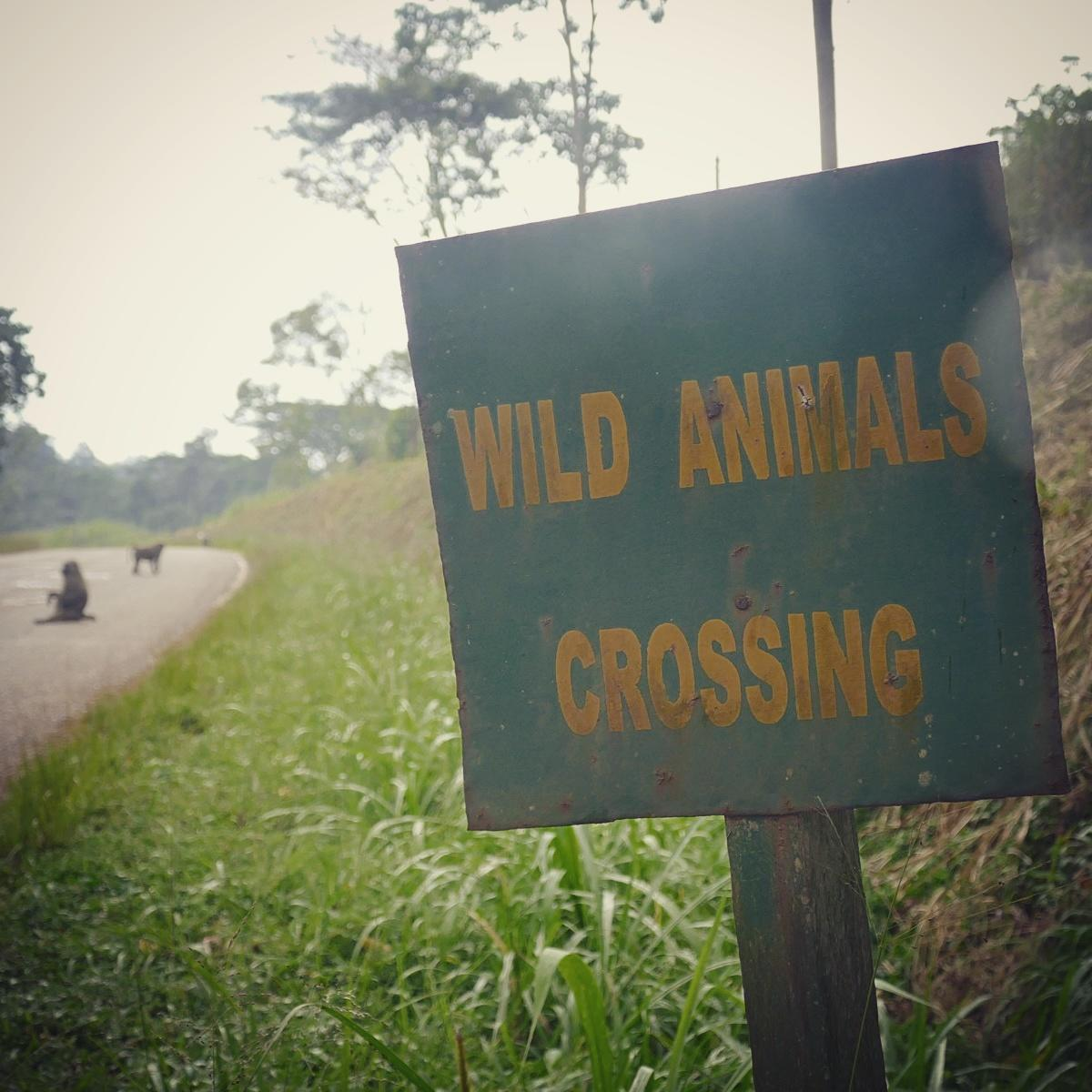 A sign warns of baboons crossing the highway. Noah Strycker