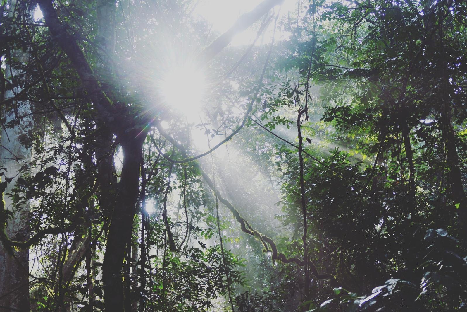 Morning sun shines through the forest at Kibale. Noah Strycker