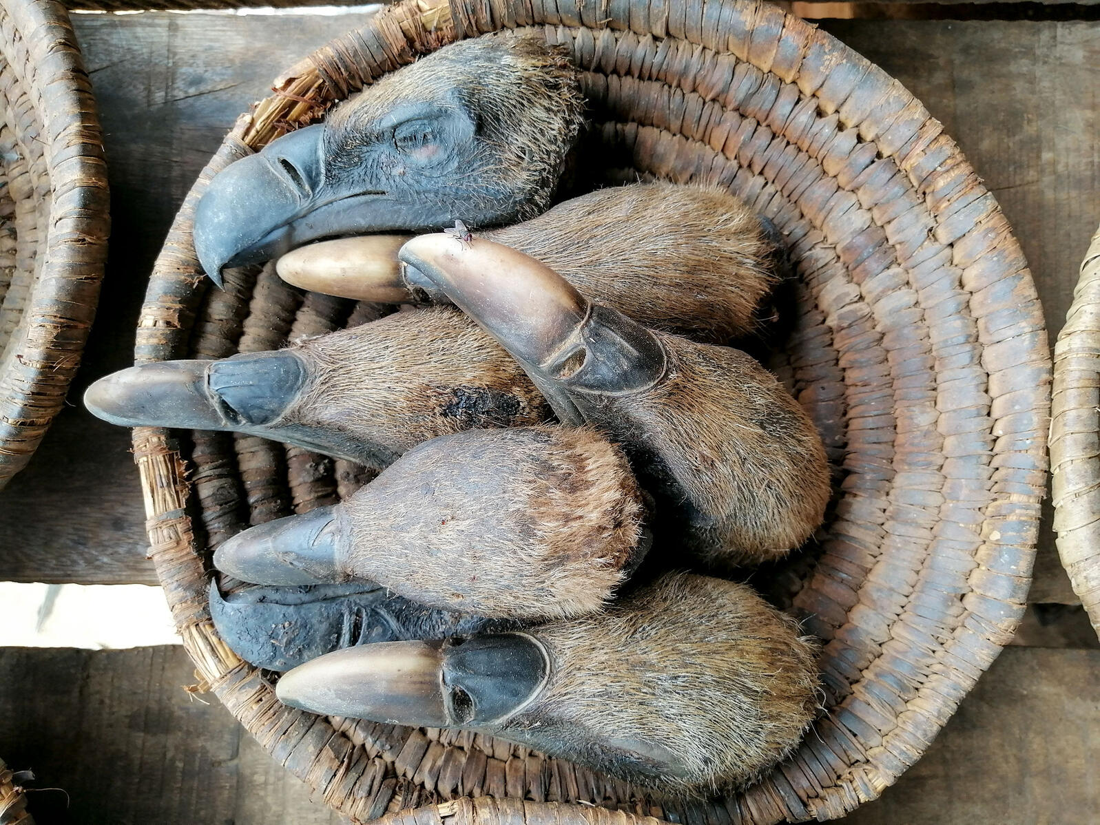 The heads of Rüppell's Vultures on display for sale at a wildlife market in Ibadan, Nigeria. Stephen Awoyemi
