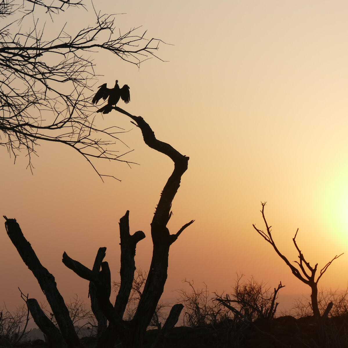 Sunrise at Lake Baringo.