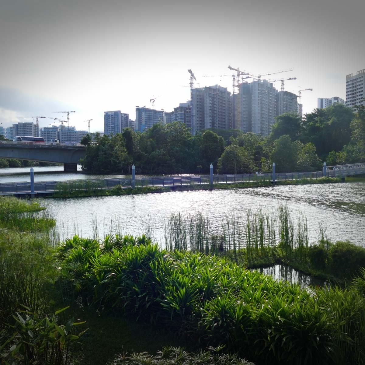 Birding in Singapore is mostly in urban parks. Noah Strycker