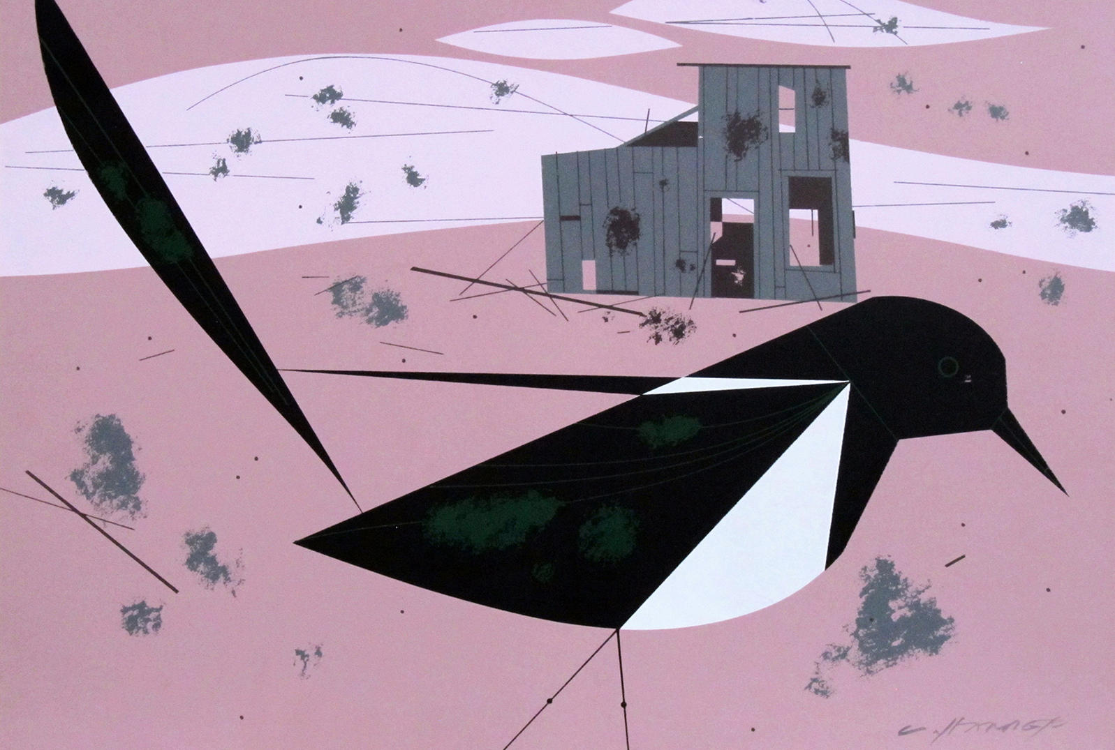 This poor magpie is sick of having a reputation for stealing. Credit: Charley Harper/AMMO