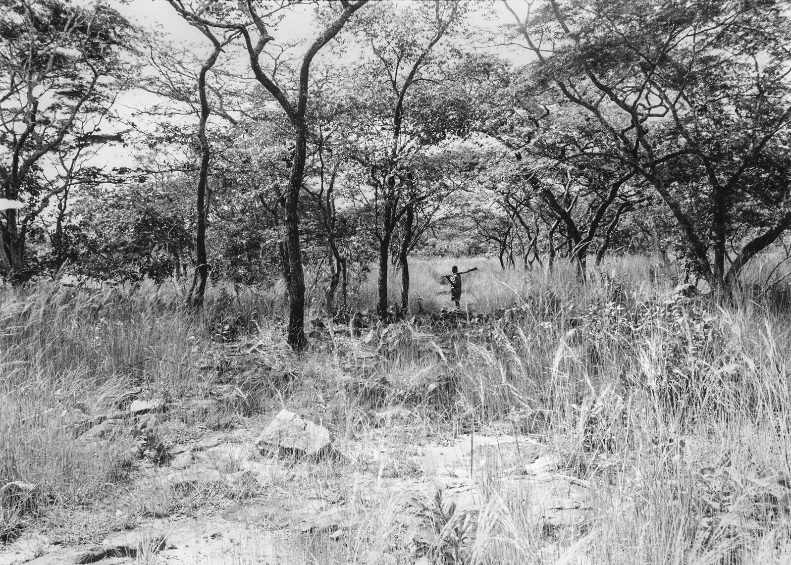 Makawa hunting in the Miombo woodlands, Zambia, 1972. Robert Payne