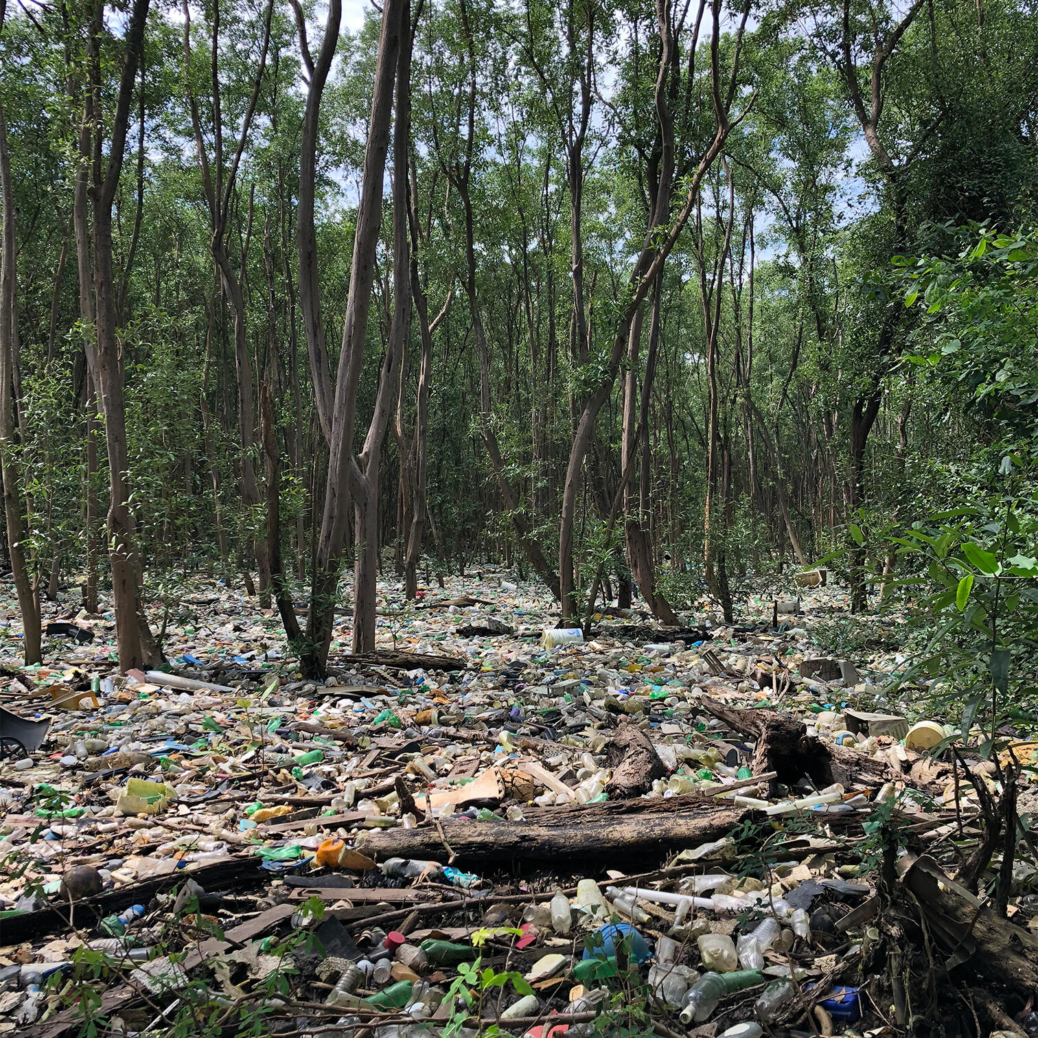 Photograph of plastic pollution in a mangrove ecosystem in the Bay of Panama. The negative impacts of plastic pollution are particularly evident in mangrove ecosystems throughout the Bay of Panama.
