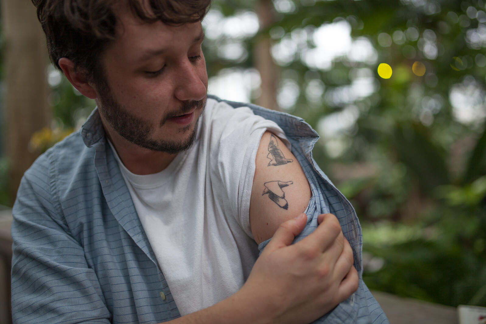 The author shows off his tattoo of two Black-legged Kittiwakes, which are based on an original drawing from David Allen Sibley that he now owns. Camilla Cerea/Audubon