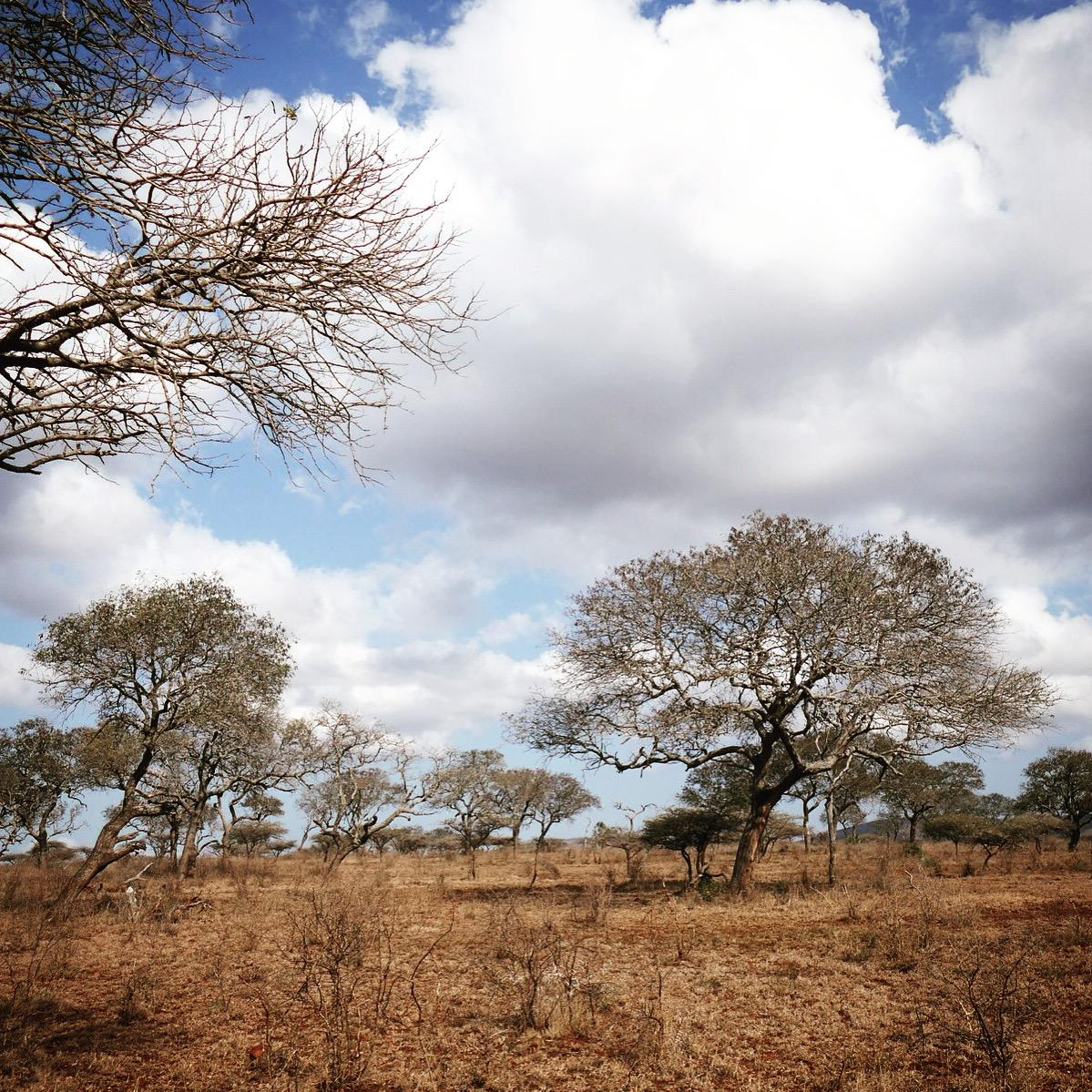 Dry forest at Mkhuze Game Reserve. Noah Strycker