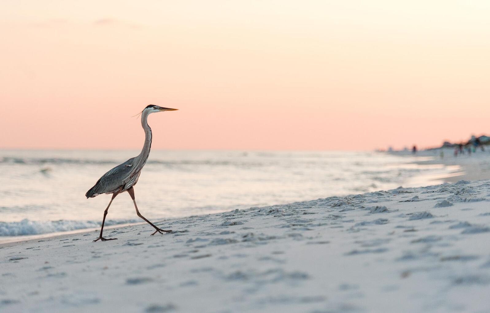 Great Blue Heron. Tracye Pulliam/Audubon Photography Awards