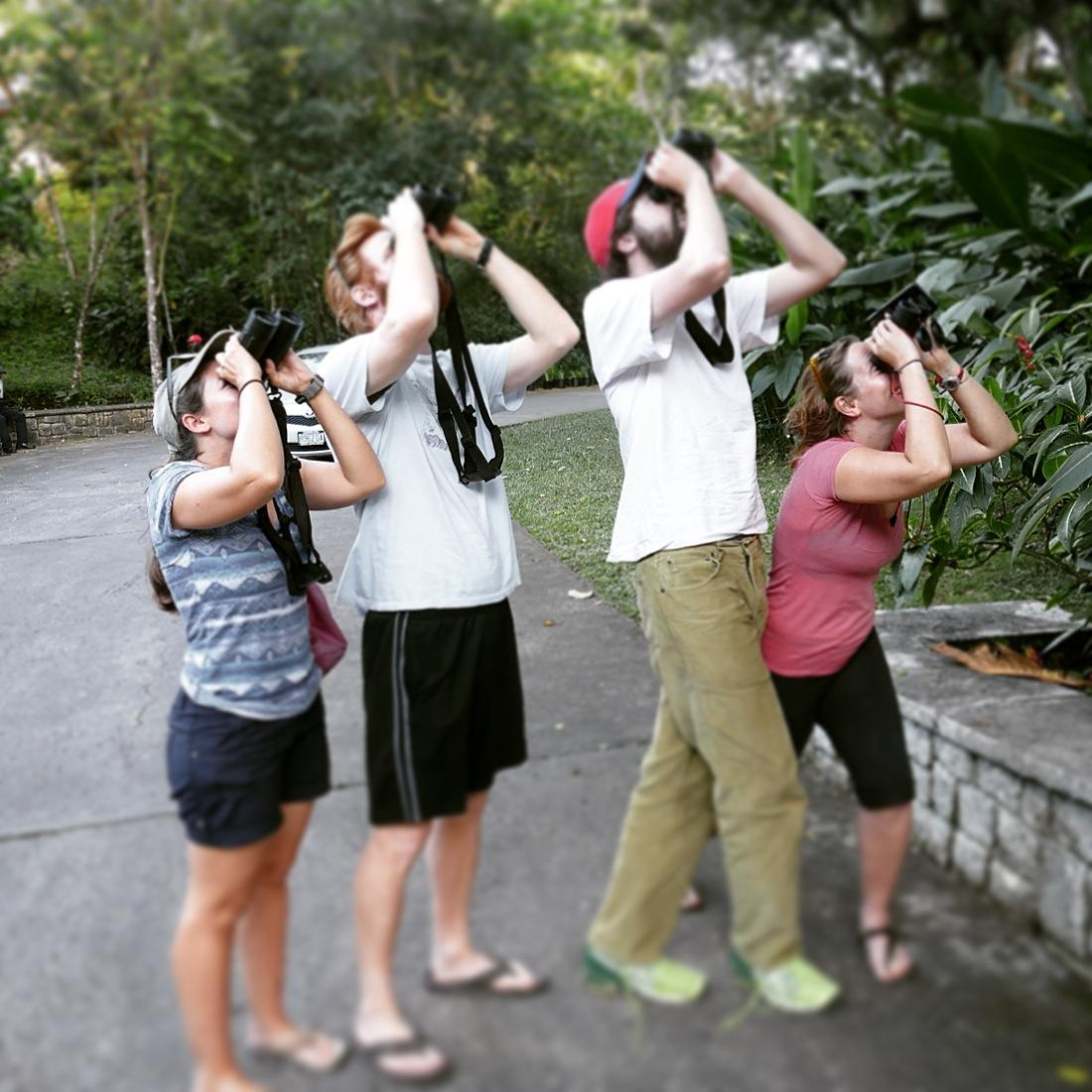 Liz, Jay, Tom, and Barbara check out a roosting Jamaican Owl at Frenchman's Cove. Noah Strycker