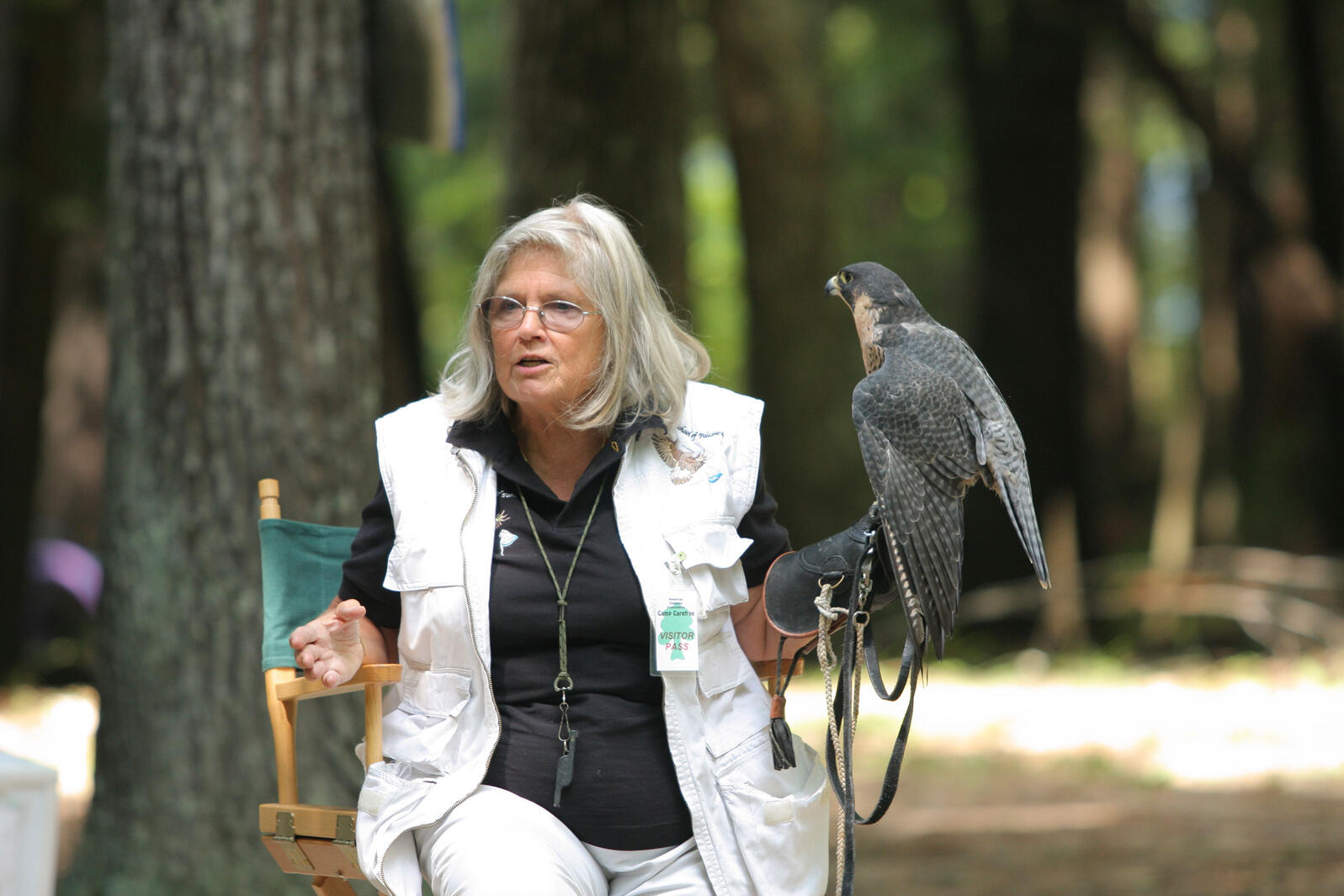 Trainer, instructor, and author Nancy Cowan with a Peregrine Falcon. Laura Murphy/ADA Camp Carefree