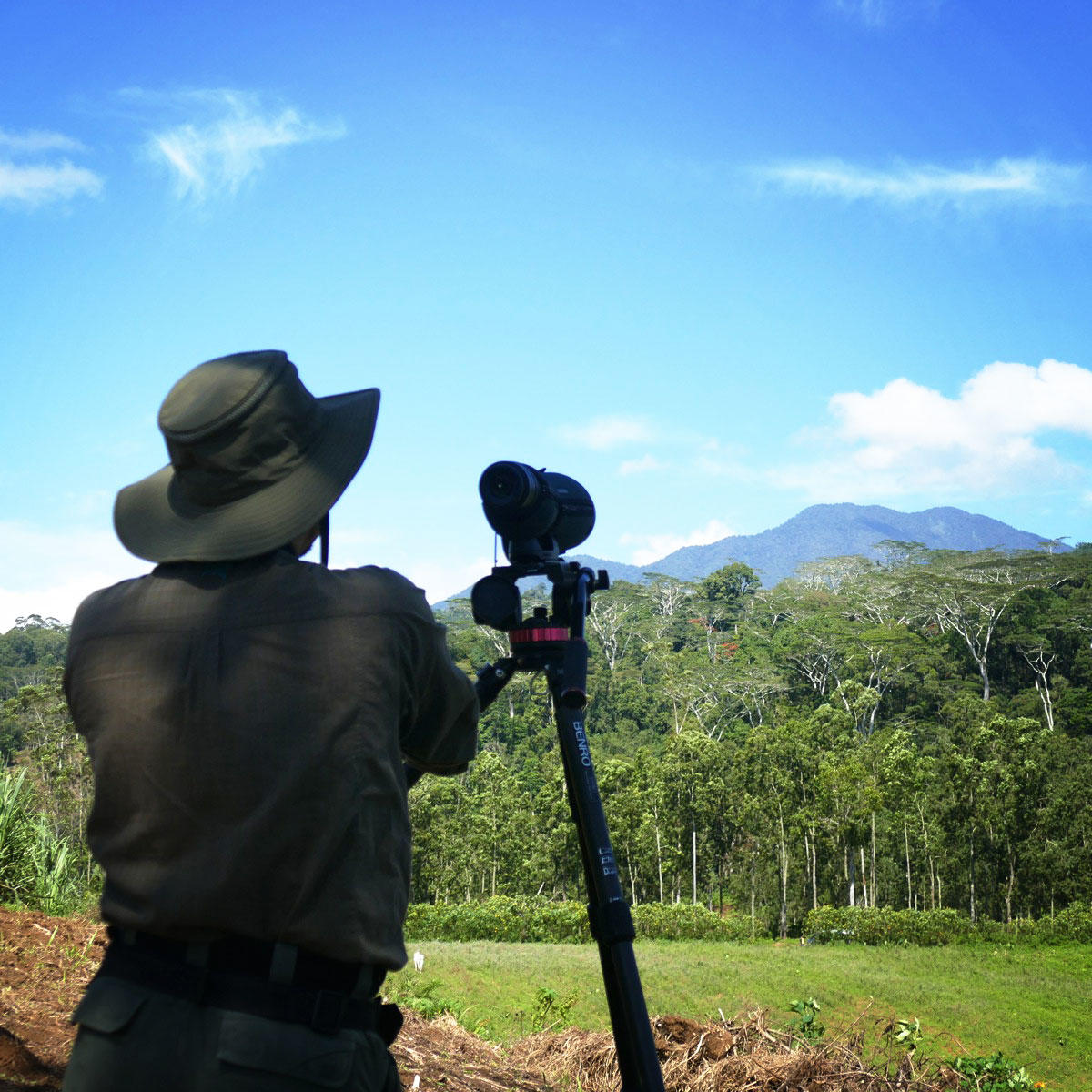 Searching for the Philippine Eagle. Noah Strycker
