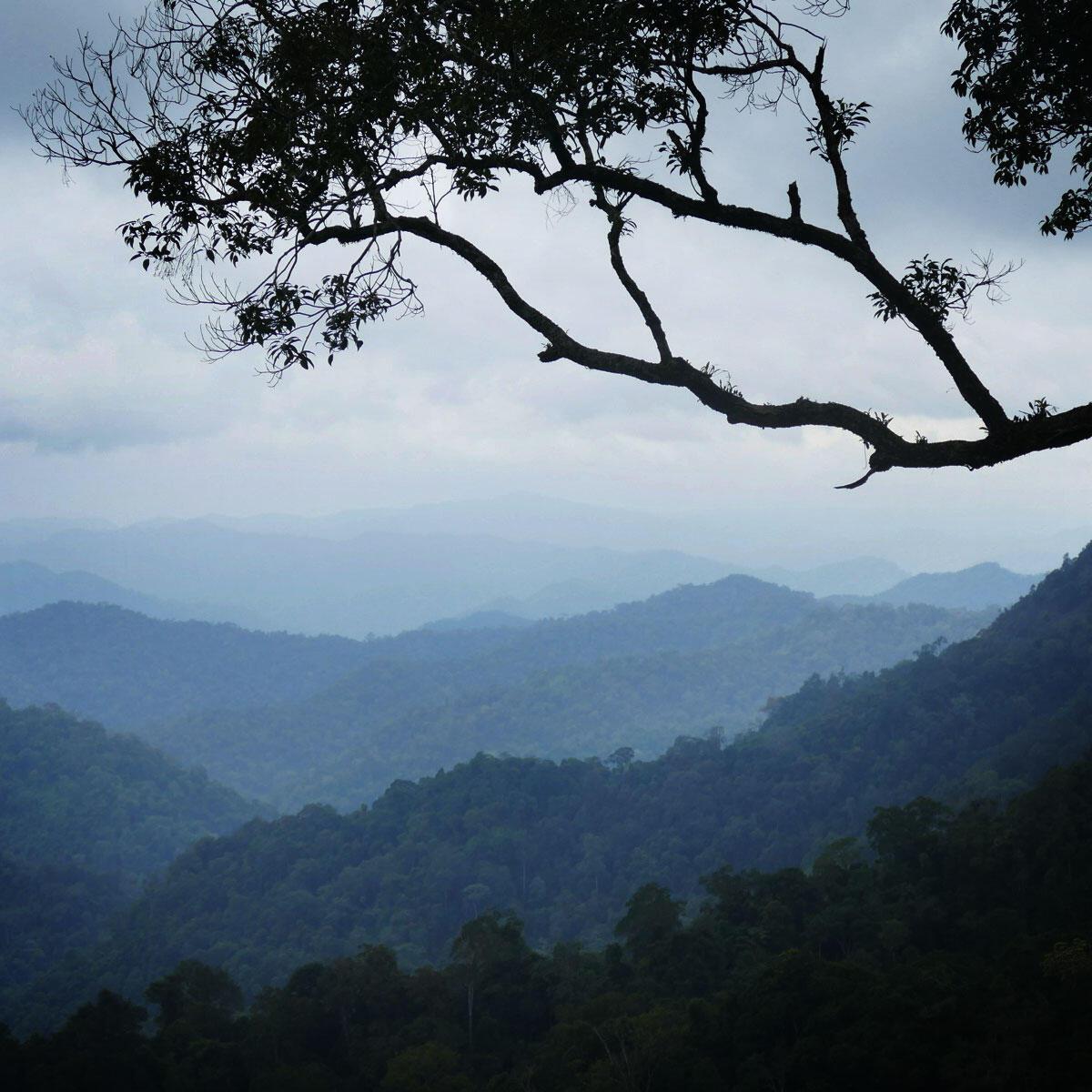 Rugged forest recedes westward into Myanmar. Noah Strycker