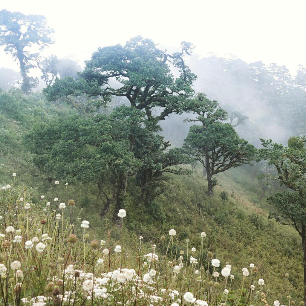 Oak trees loom from the mist atop Mount Victoria. Noah Strycker