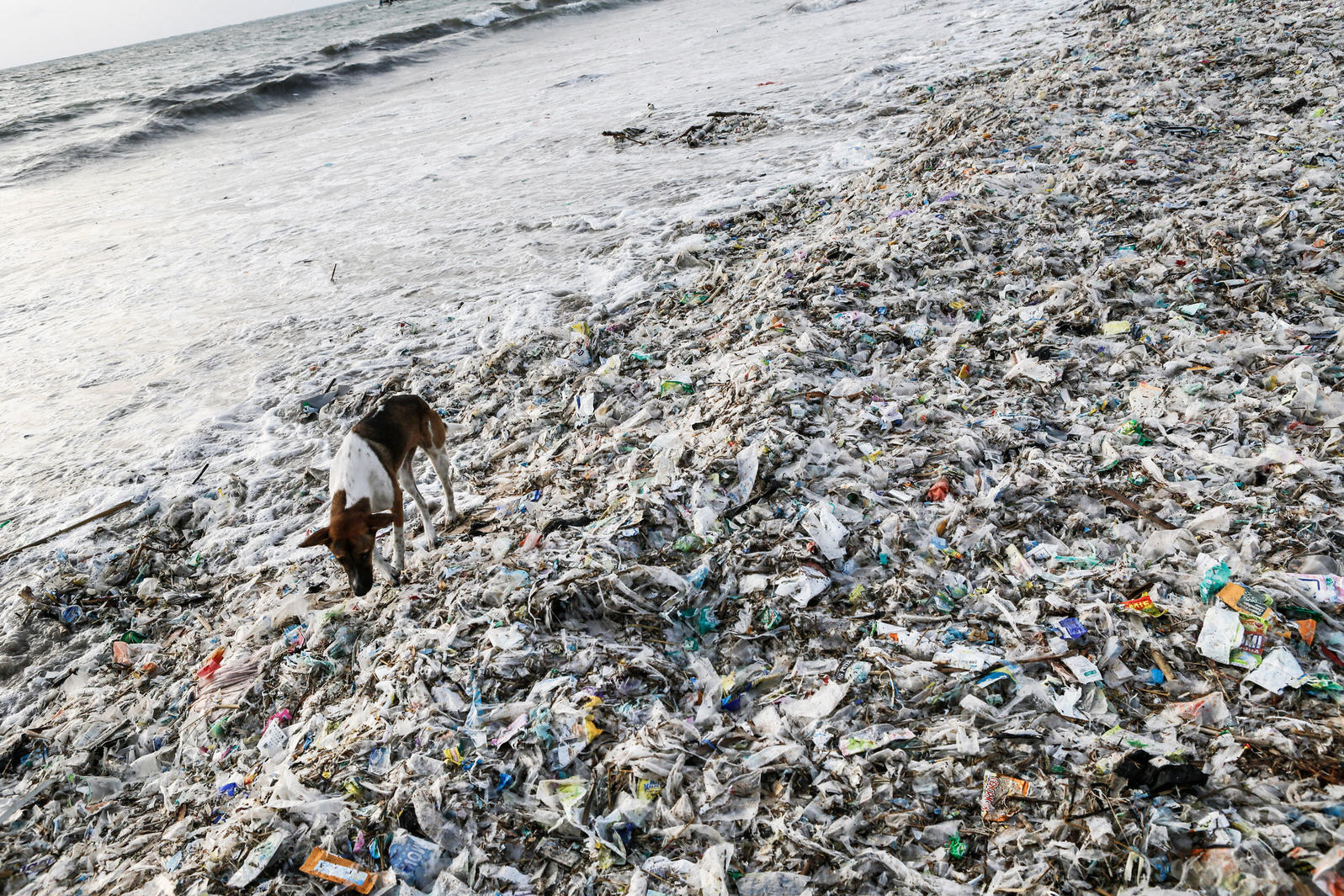 Plastic washes up at Kedonganan Beach in Indonesia. Billions of pounds of plastic pollute the world's oceans and harm wildlife. Putu Sayoga/Redux