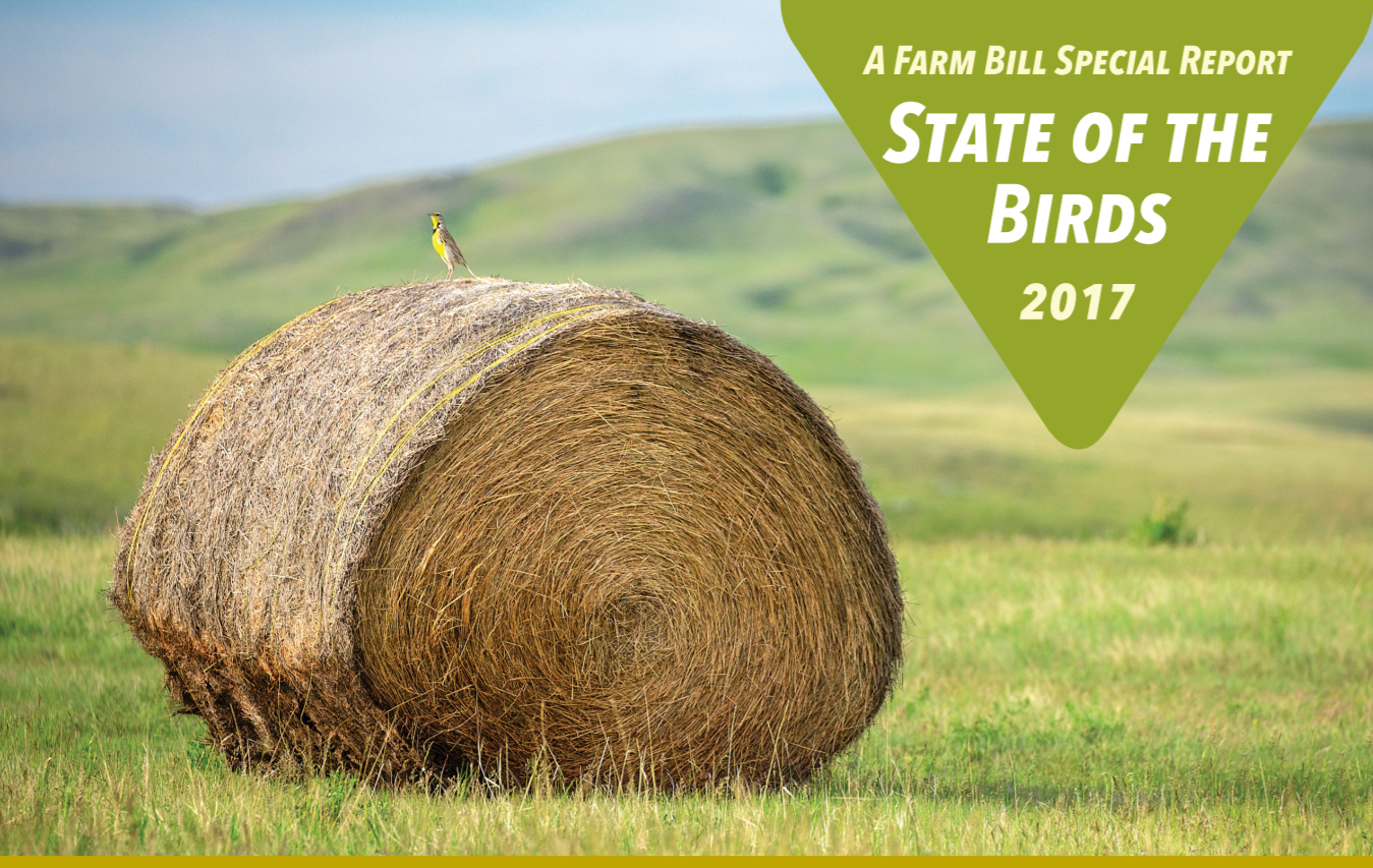 Cover of the 2017 State of the Birds Report