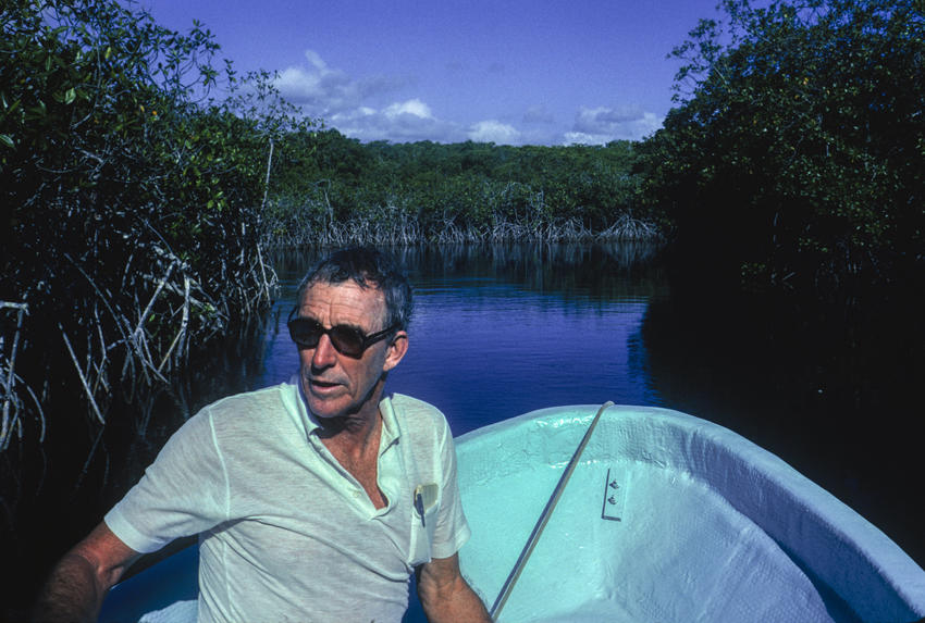 Peter Matthiessen exploring a mangrove forest in Guatemala in 1991. Photograph by William Campbell/Corbis