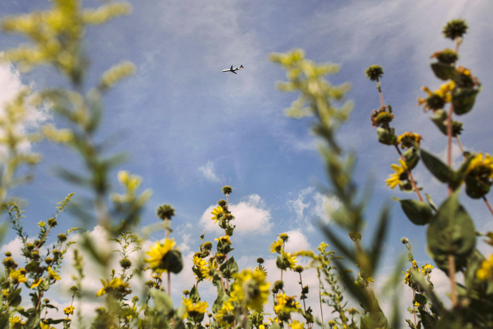 A plane flies over Knoop Prairie. Andrew Spear/The New York Times/Redux