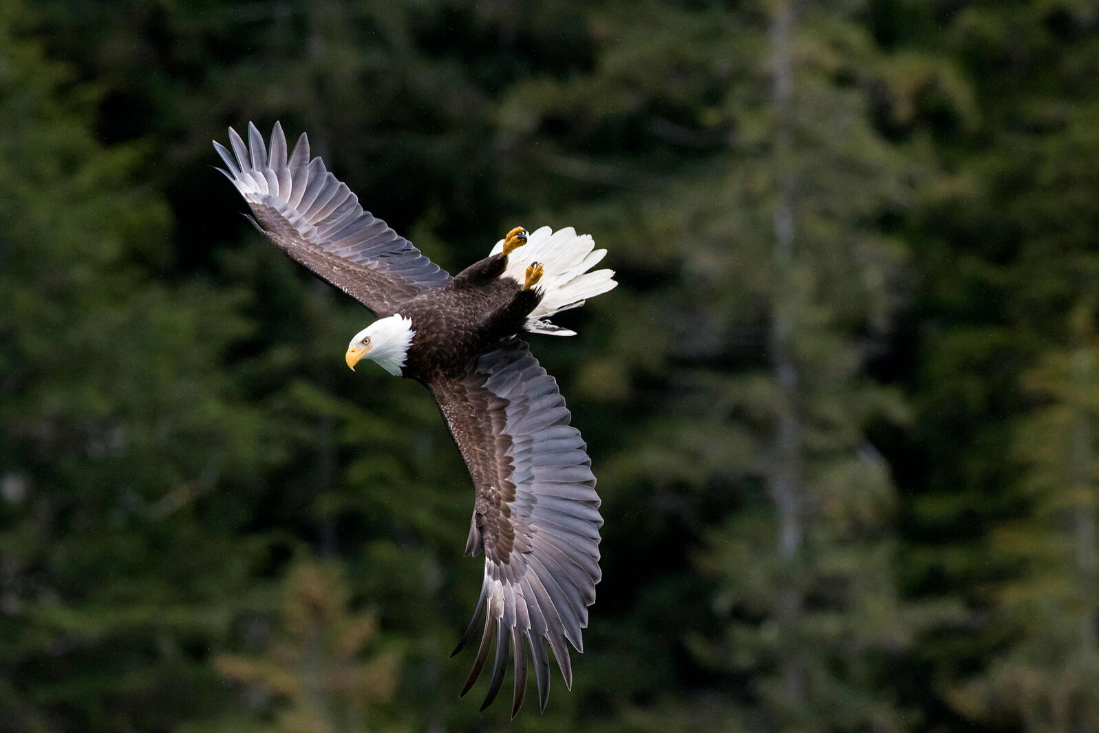 Petition: Trump Administration Removes Roadless Protections for Tongass National Forest