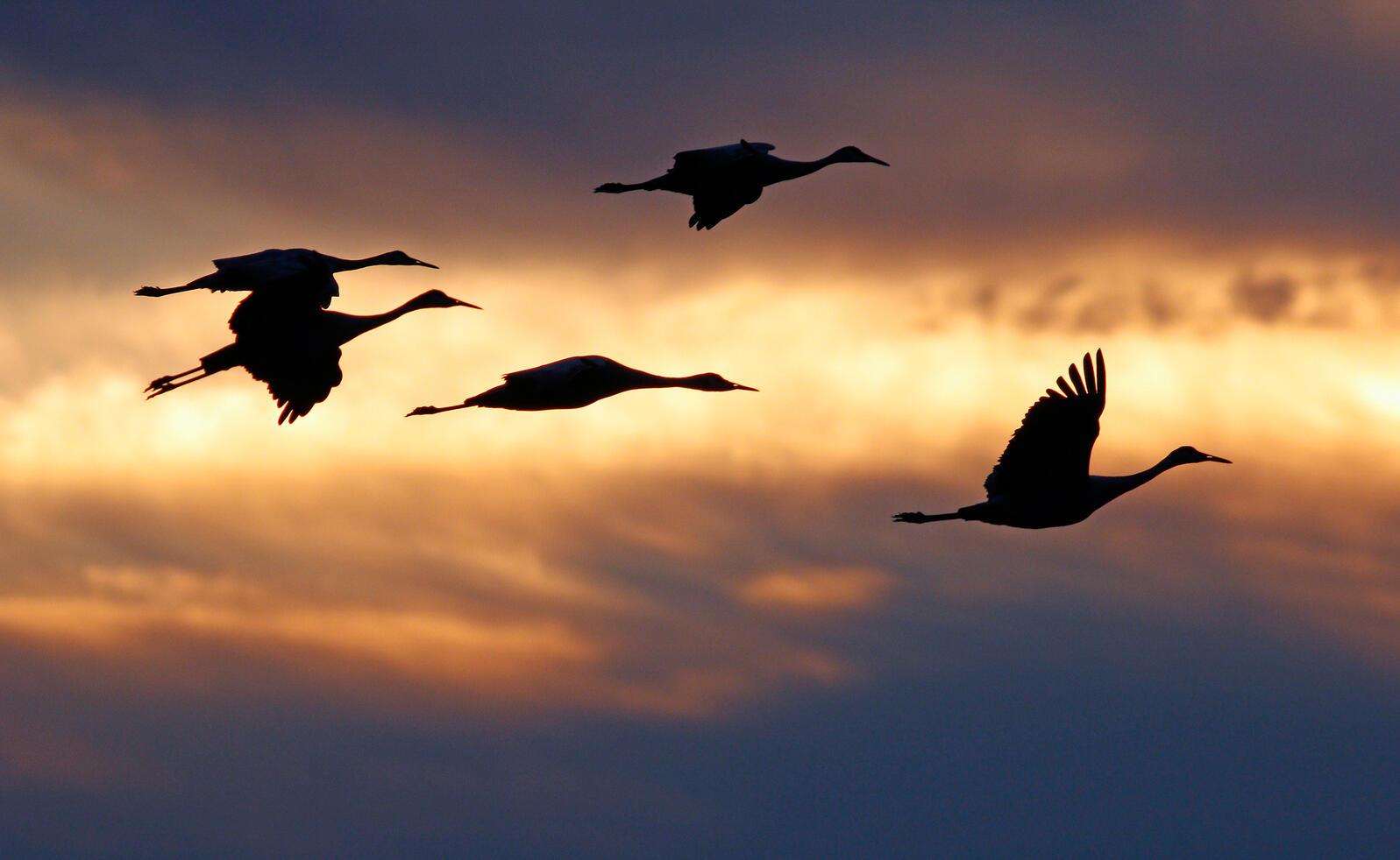 Sandhill Cranes. Mark Wright/Audubon Photography Awards
