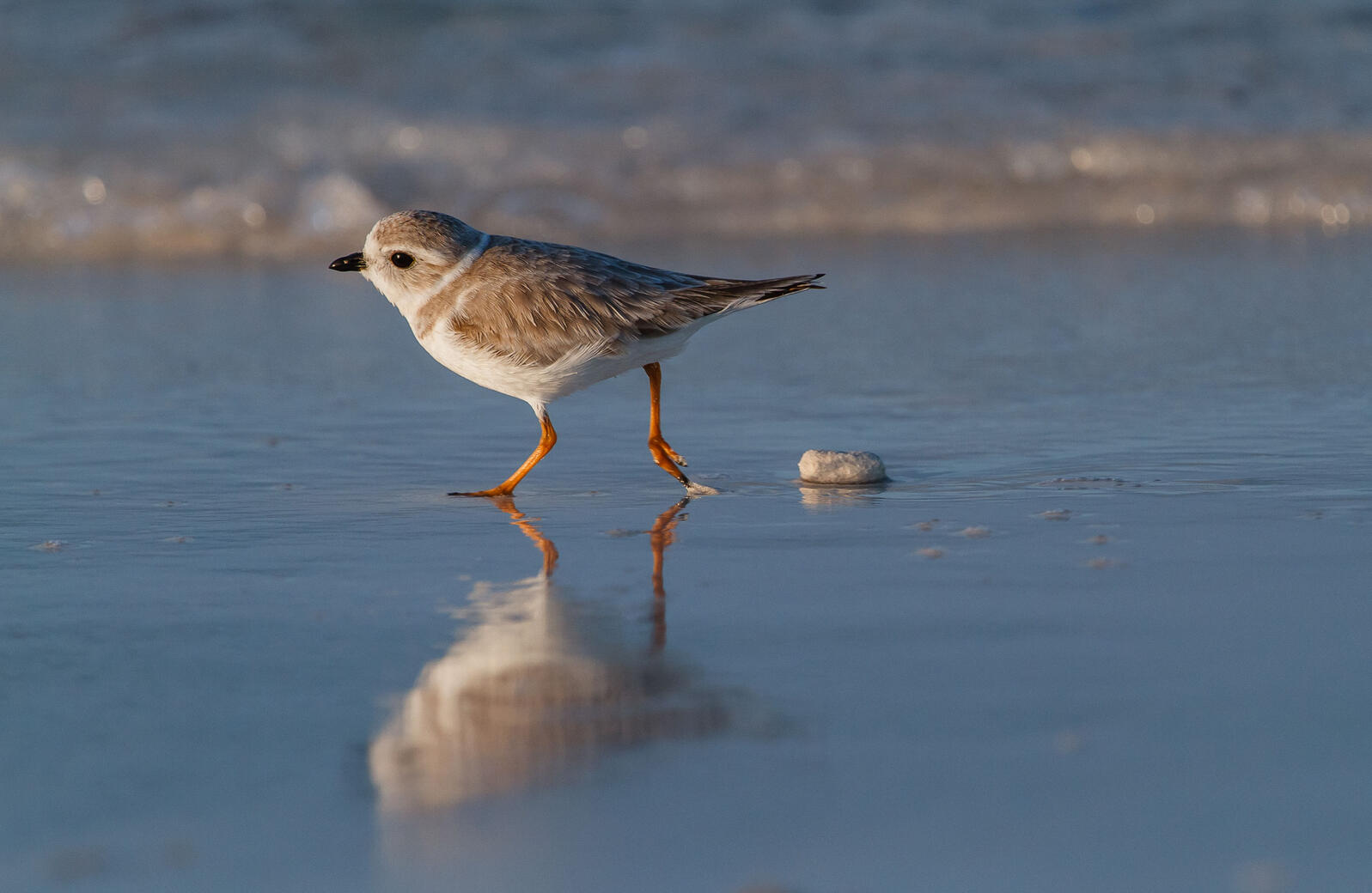 Proposed Mines in The Bahamas Threaten Winter Home of Migratory Shorebirds
