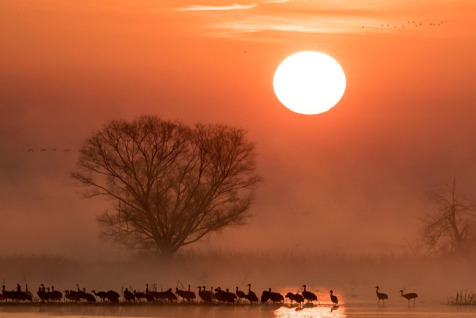 Sandhill Cranes. Donald Quintana/Audubon Photography Awards
