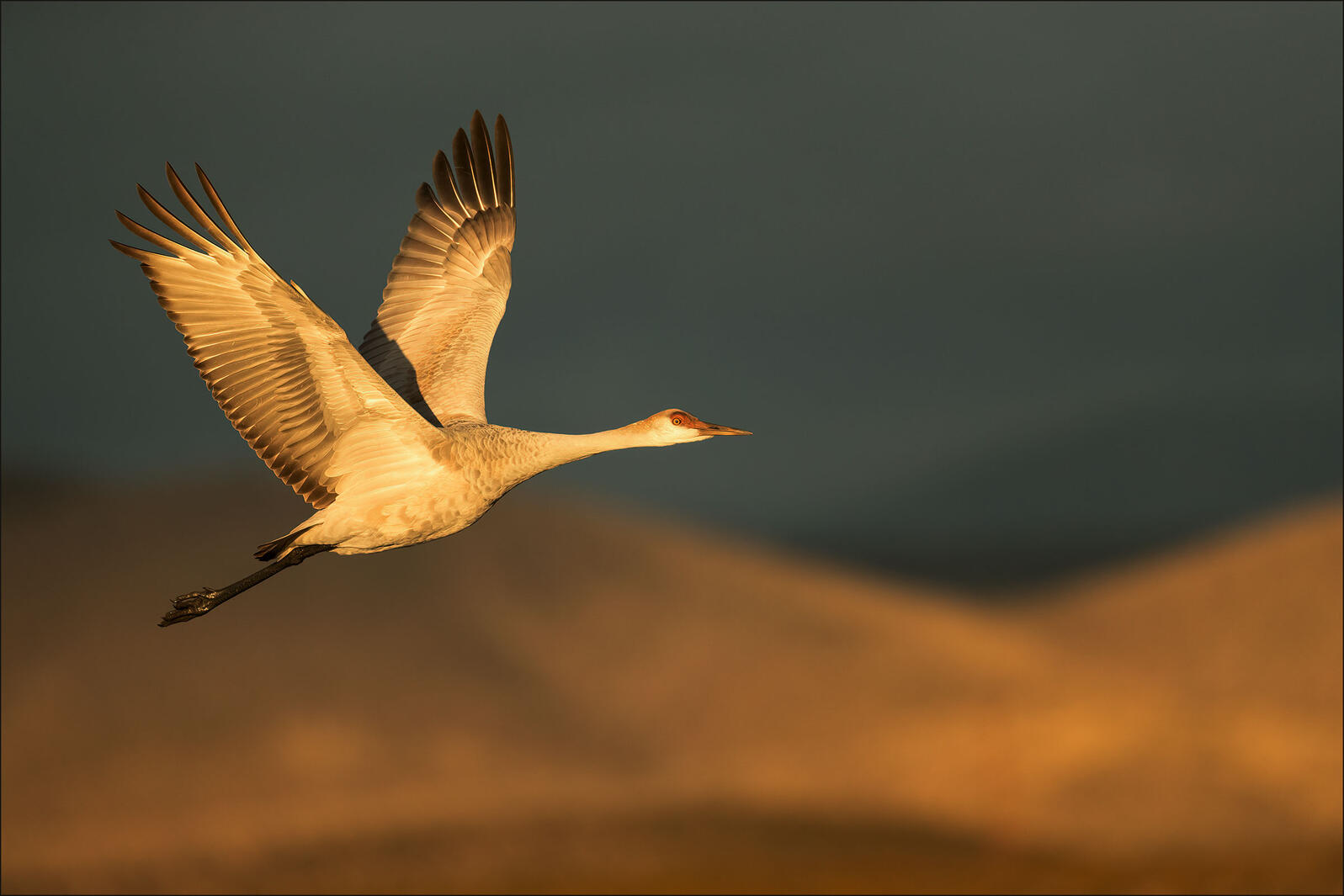 Sandhill Crane. Caroline Samson/Audubon Photography Awards