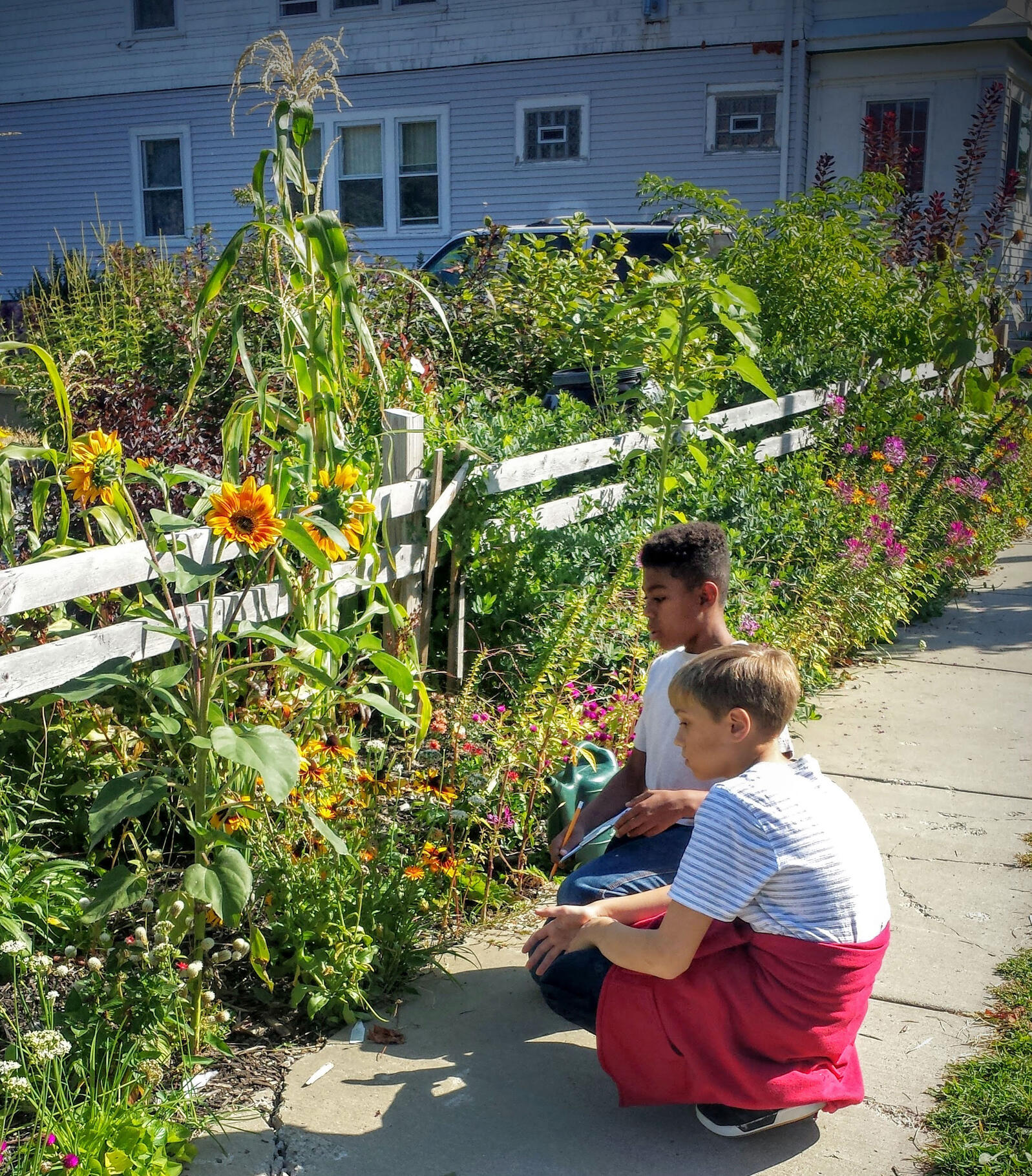 Buffalo nonprofits are transforming empty spaces into thriving gardens. Lauren Makeyenko/Buffalo Audubon Society