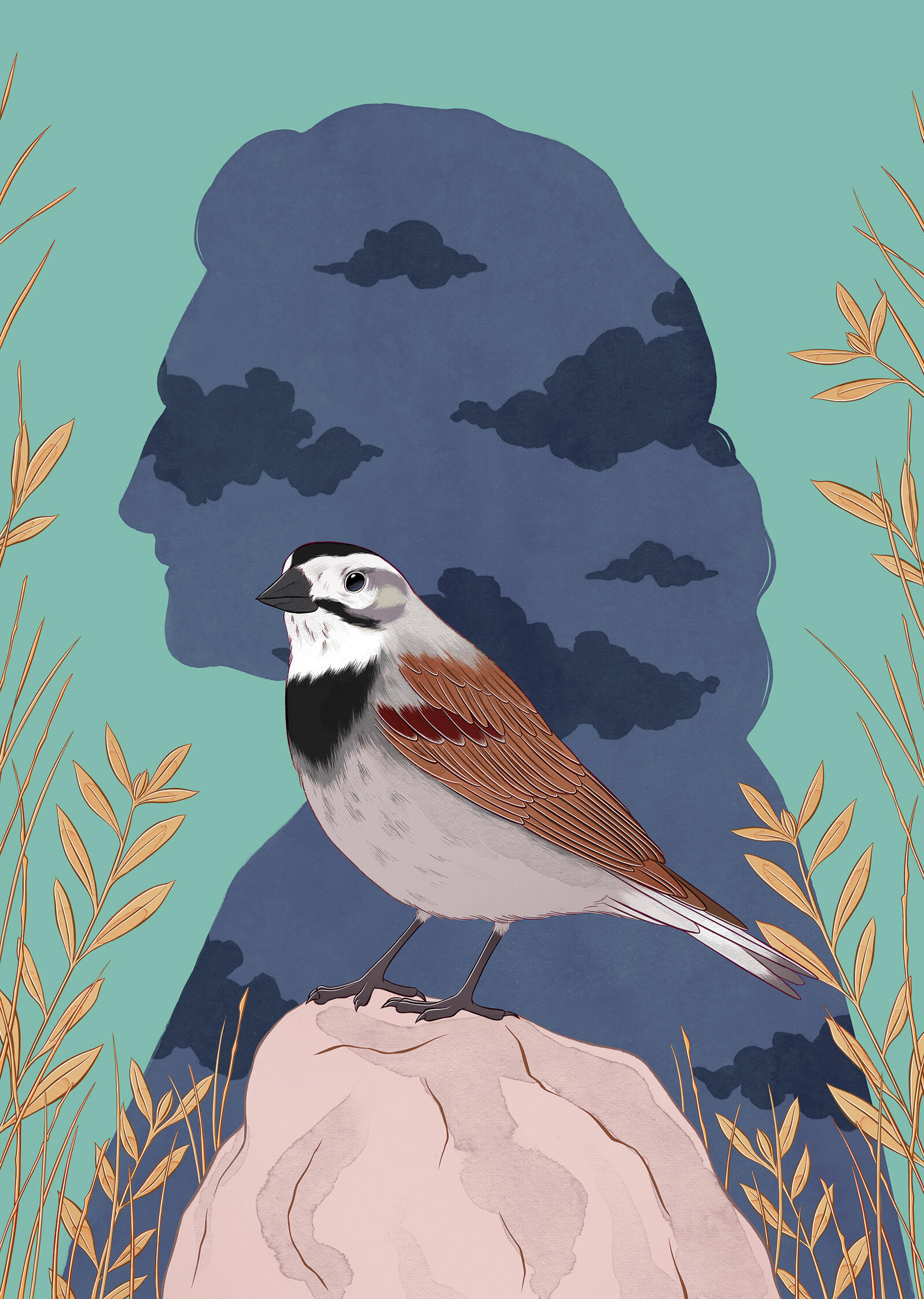 The bird formerly called the McCown's Longspur is now the Thick-billed Longspur. The racist actions of figures like John James Audubon cast a long shadow over today's birding and conservation communities. Illustration: Stephanie Singleton