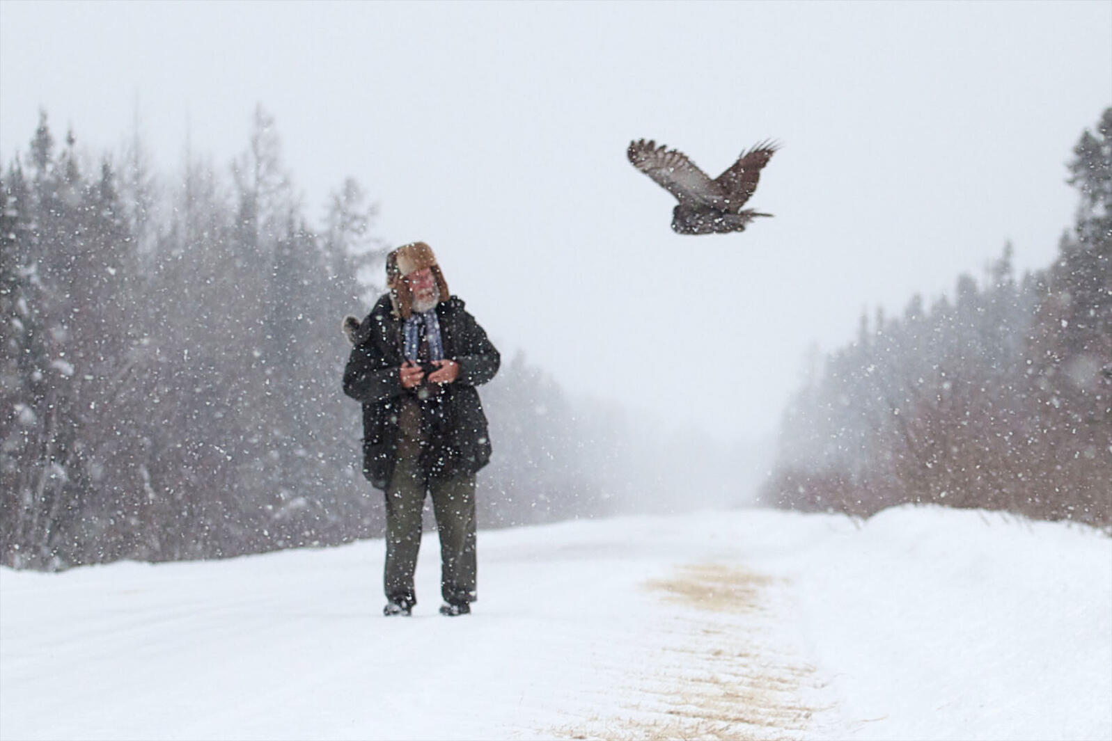Minnesota's Sax-Zim Bog Is a Winter Haven for Boreal Birds ...