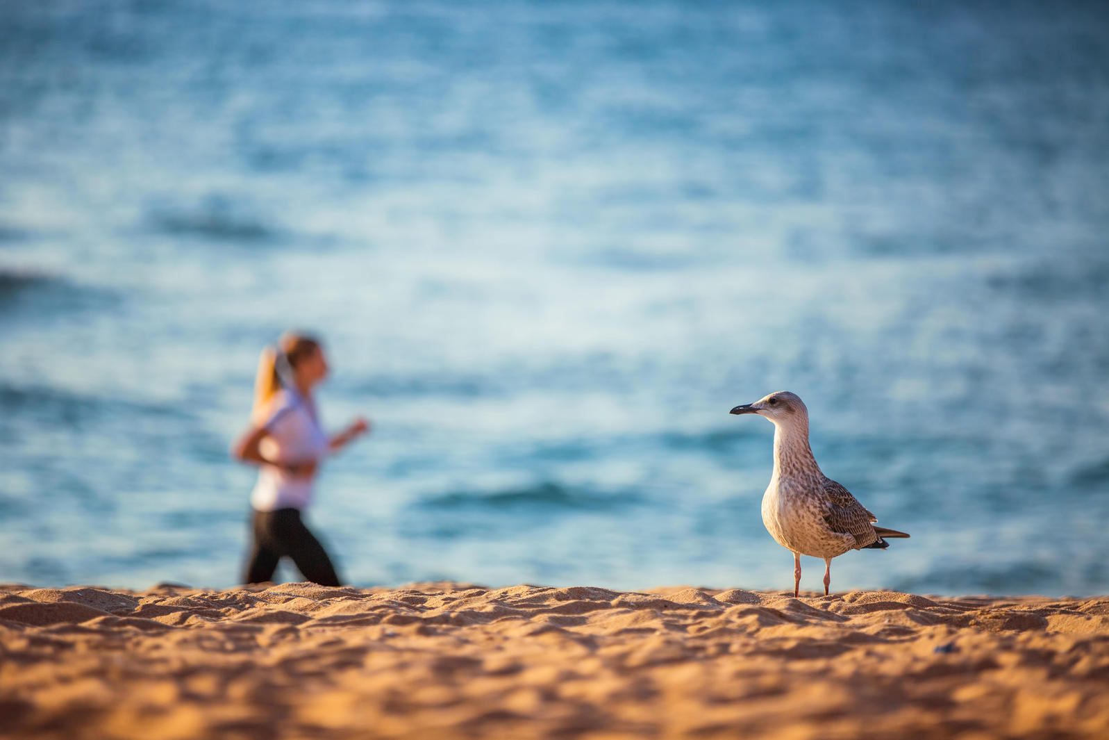 Beach runs can be a challenge, both for your calves and for your gull-ID skills. Valentin Valkov/Alamy