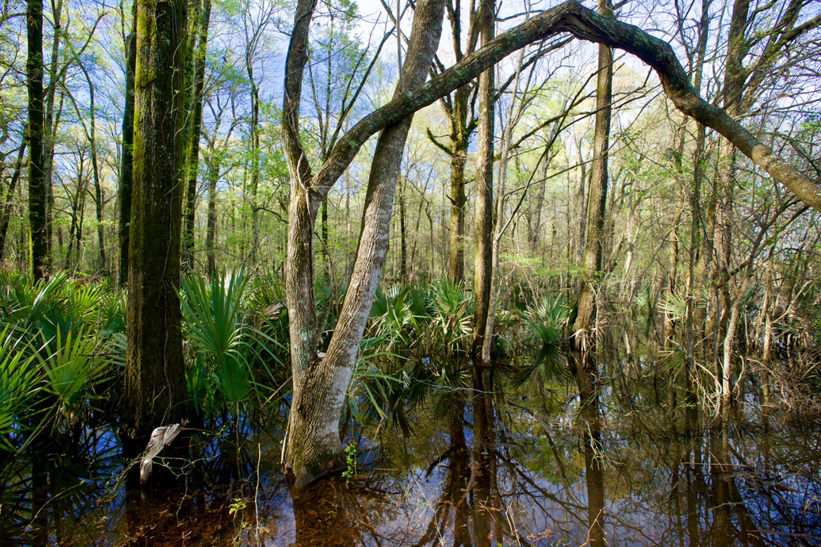 Wetlands in Panther Swamp National Wildlife Refuge are among those that the Yazoo Pumps project could damage. Stephen Kirkpatrick/Mississippi River Network