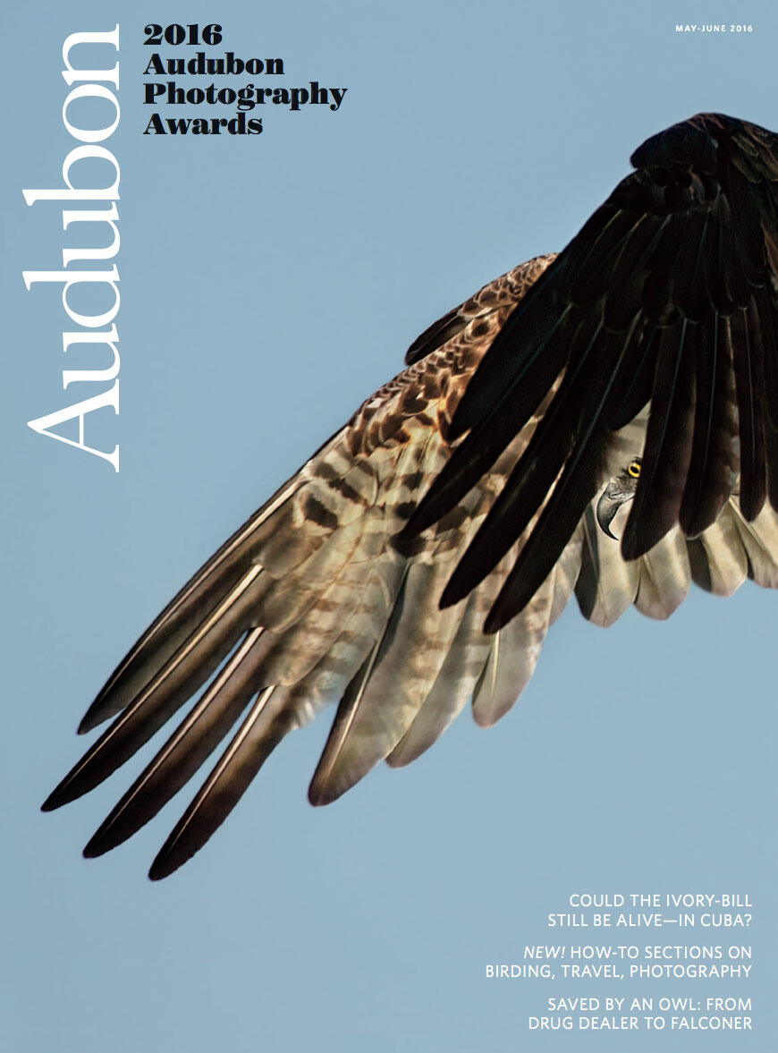 """The May/June issue of Audubon has a new look—thanks in part to the gorgeous photo awards entries (""""Professional Winner"""" shown above) and no more advertising. Dick Dickinson/Audubon Photography Awards"""