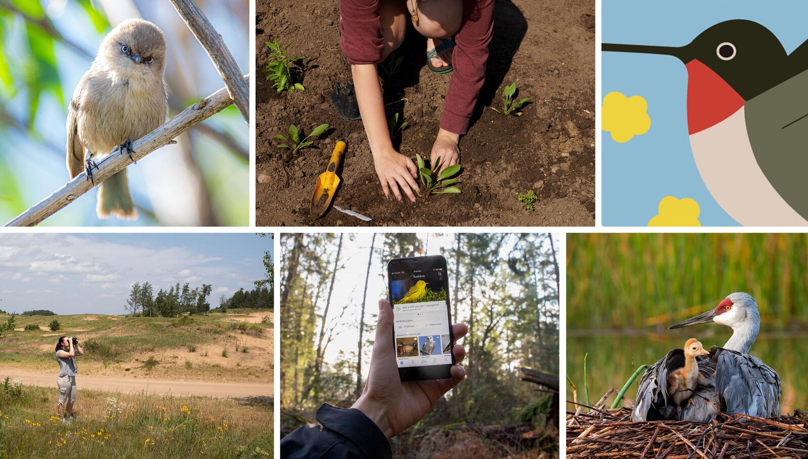 Photos/Illustration clockwise from top left: Devin Grady/Audubon Photography Awards; Bridget Bennett; Alex Tomlinson; Mary Lundeberg/Audubon Photography Awards; Luke Franke/Audubon; Camilla Cerea/Audubon