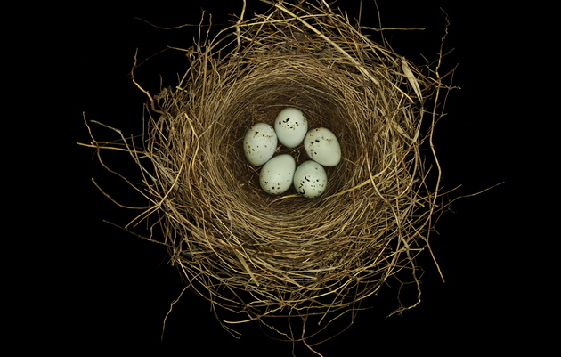 Small Miracles: The Wonder of Birds' Nests