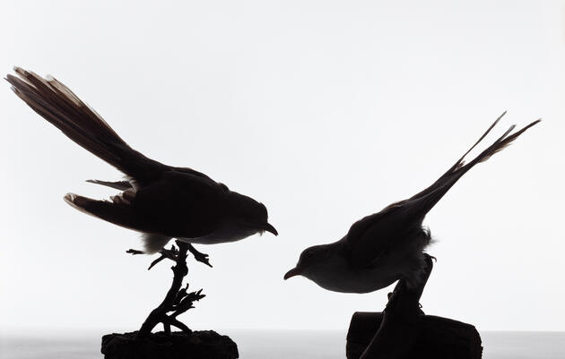 Birds that Perish During Migration are the Stuff of Education