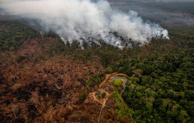 The Amazon's Blazing Fires Are Squeezing Habitat for Imperiled Birds