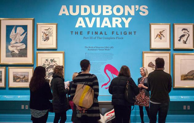 Audubon's Aviary Opens at the New-York Historical Society