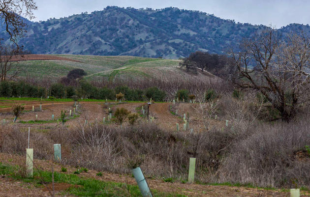 Working Lands: A California Couple Builds Habitat Along Stream Edges