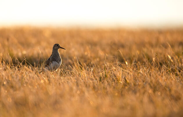 Interior Department Finalizes Plan to Drill in the Arctic Refuge