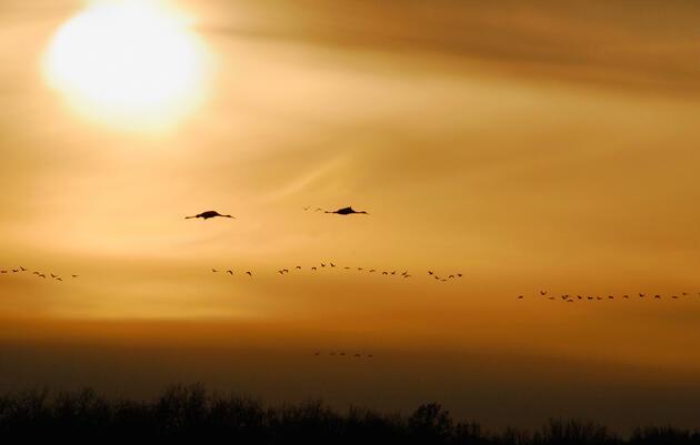 Corredor de la ruta migratoria central