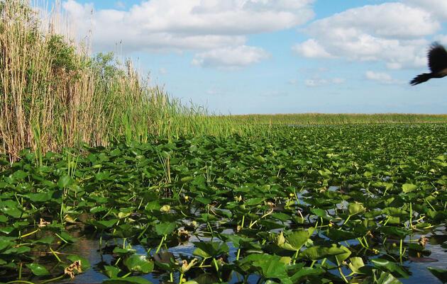 Ecosistema de Everglades