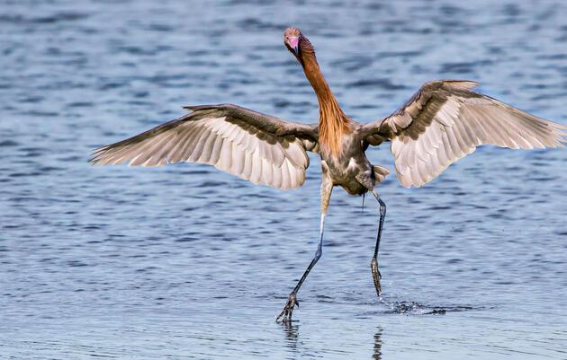 Coastal Stewardship: Gulf