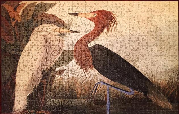 John James Audubon's Purple Heron is our Reddish Egret. National Audubon Society.