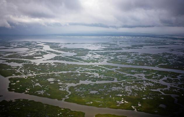 Saving Louisiana