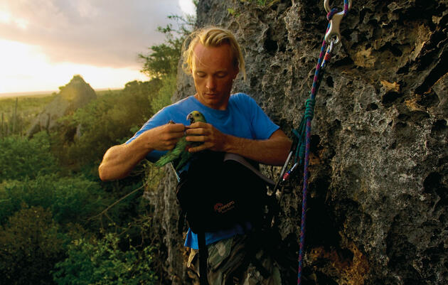 Photograph by Kim Hubbard. Rowan Martin gets ready to measure a yellow-shouldered parrot chick as part of an effort to protect the imperiled species. Photograph by Kim Hubbard.
