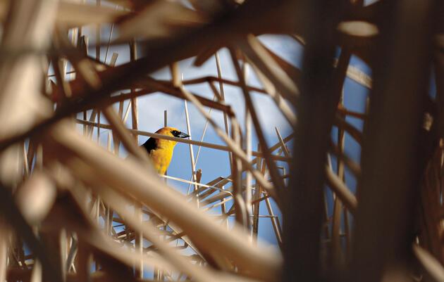 Aves de pastizal
