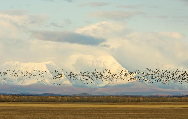 Ley de Conservación de Aves Migratorias Neotropicales