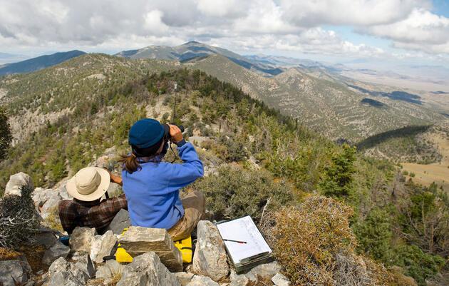 Ocho de los mejores sitios de avistamiento de halcones en EE.UU. para fotógrafos