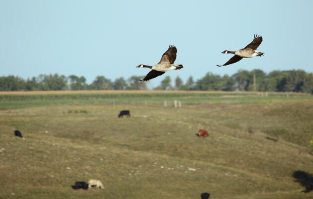 For Ranchers: FAQs on Audubon's Conservation Ranching Initiative