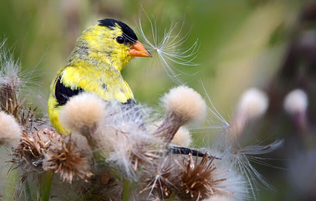 More Birds Rely on Special Molting Locations Than We Realized