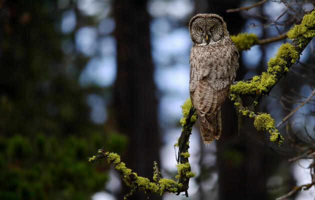 13 Fun Facts About Owls